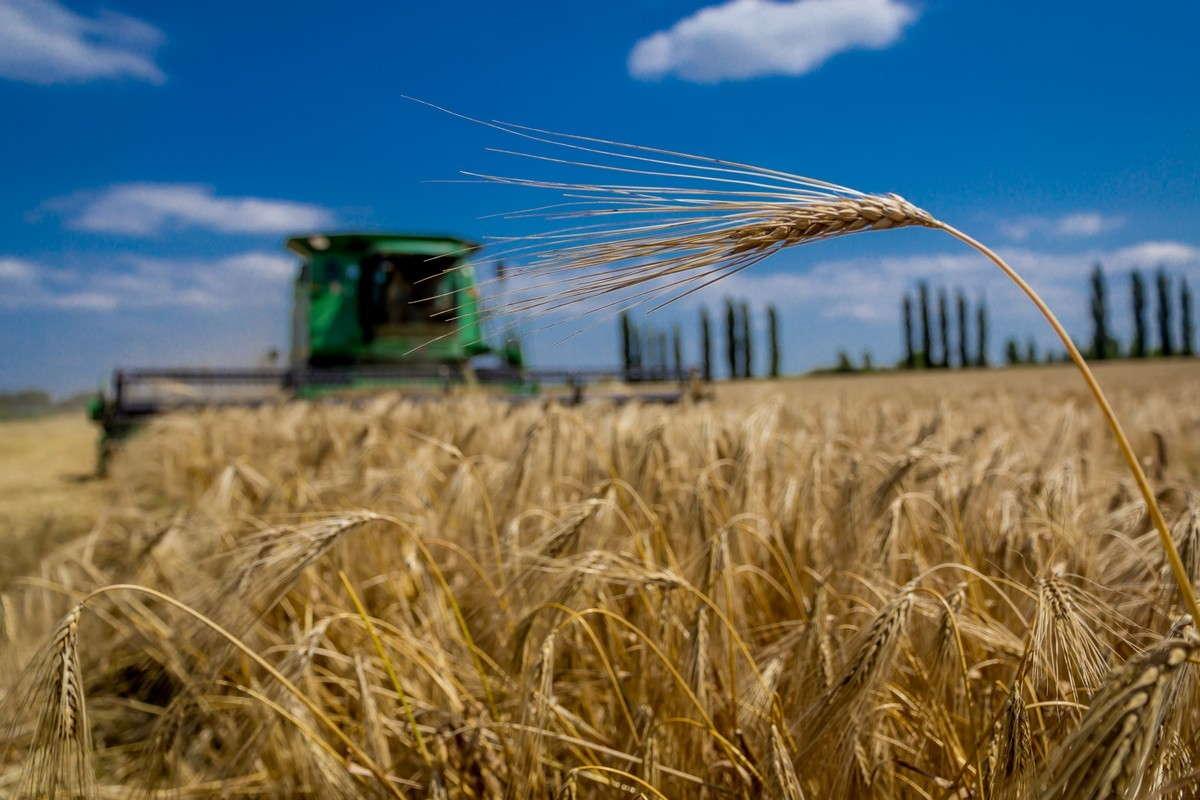 AGROFUSION HAS STARTED THE GRAIN HARVESTING SEASON
