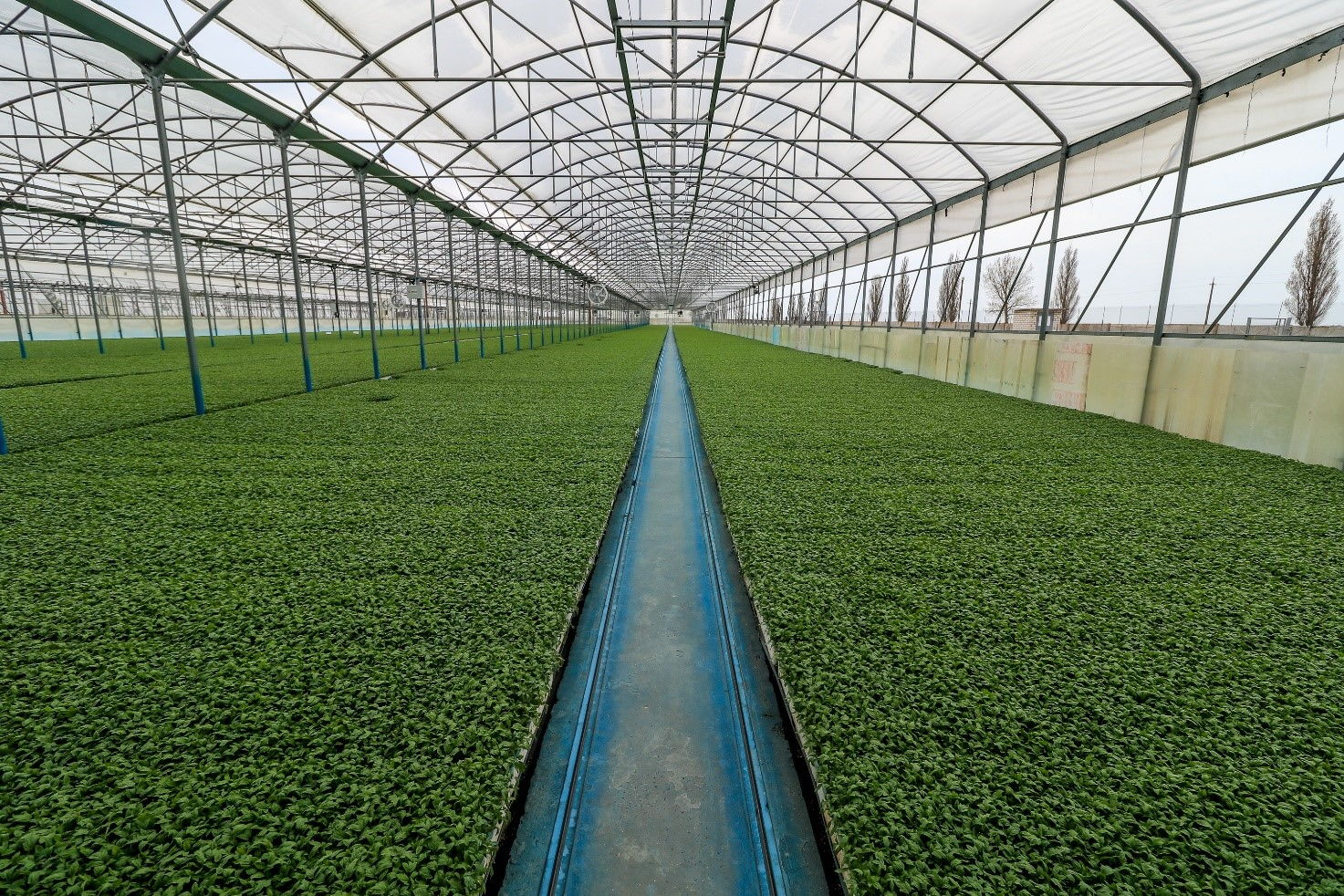AGROFUSION PASSED GLOBALG.A.P. AUDIT